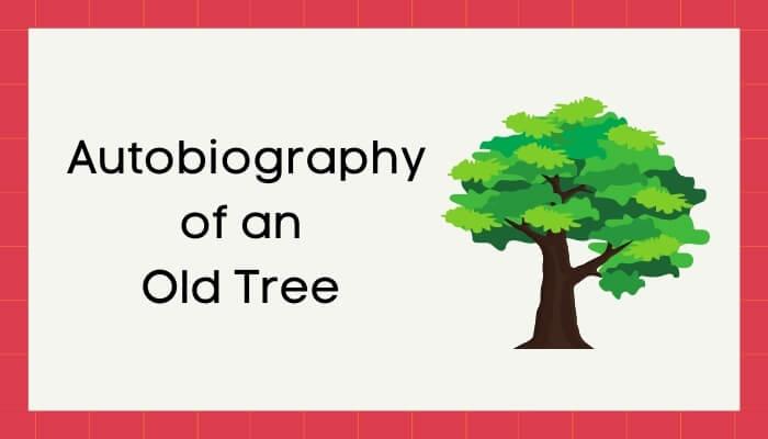 एक जीर्ण वृक्ष की आत्मकथा हिंदी निबंध - Autobiography of Old Tree Essay in Hindi