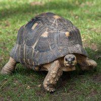 Jonathan tortoise unseen passage