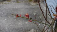 Und natürlich den Frühling beobachten
