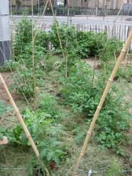 Bis sich der Spinat ausbreitet, sorgt der Heumulch für lockeren Boden