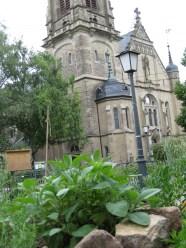 Salbei vor der Christuskirche