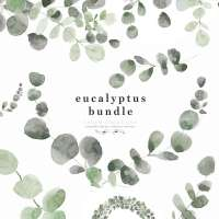 Watercolor Eucalyptus Branch Wreath Leaf Clipart PNG Foliage Greenery Botanical Illustrations Border Frame