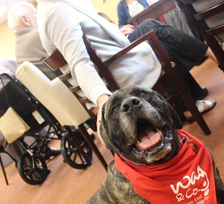 Man's best friend helps people living with dementia