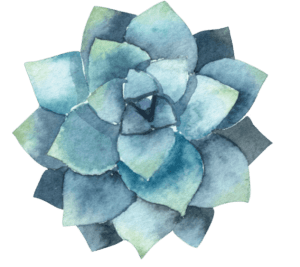 Digital watercolor of a blue succulent