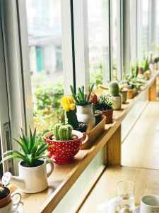 Succulents of many varieties and planters sit on a window shelf