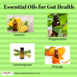 Essential Oils for Gut Health