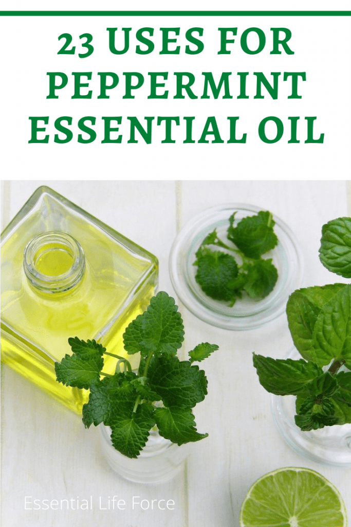 peppermint leaves and bottle of oil