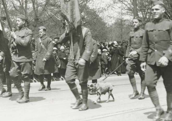 Sgt Stubby - photo credit the New Haven Register