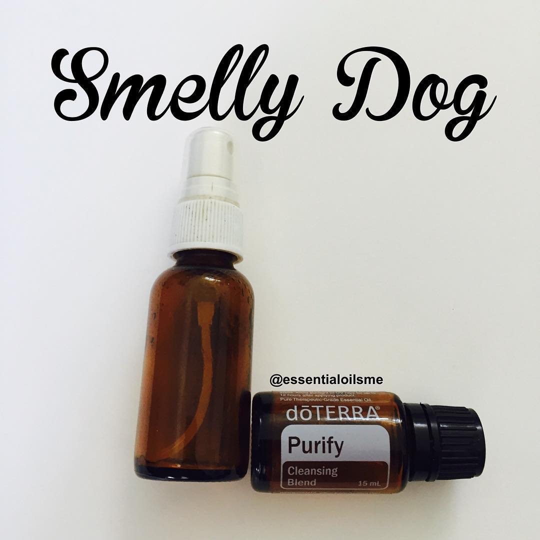 smelly dog