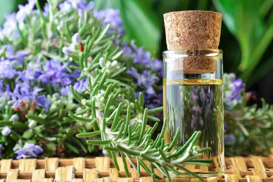 rosemary essential oil bottle