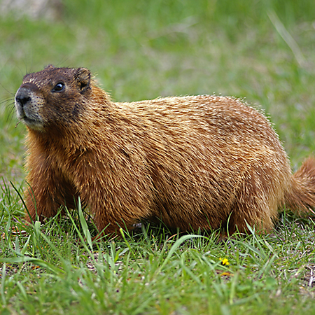 Well, it's #Groundhogs Day… Or Not!