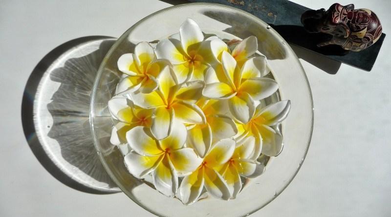Frangipani (Plumeria sp.)