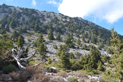 Beautiful Cretan landscape with evergreen cypress trees