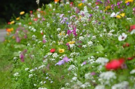 Wild flowers at the parks of the University of Sussex, Brighton