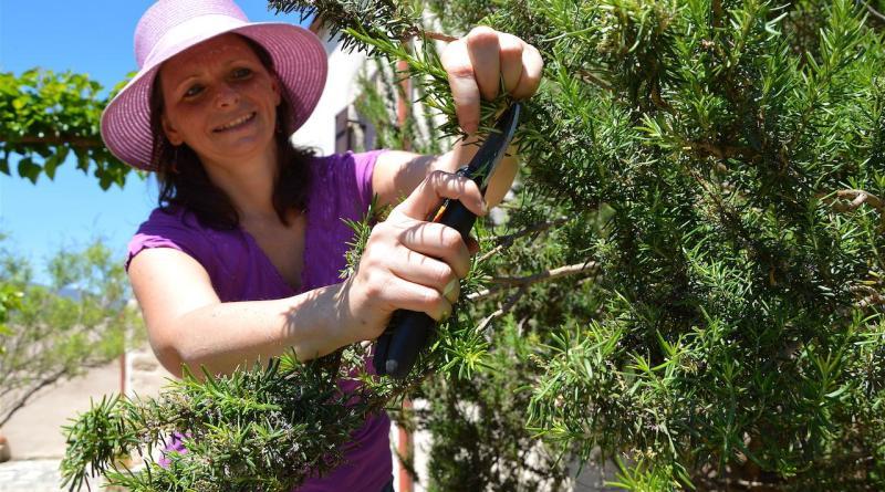 Abundant Rosemary
