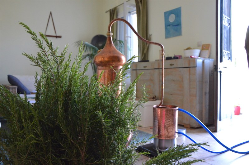Freshly cut rosemary at The Living-room distillery