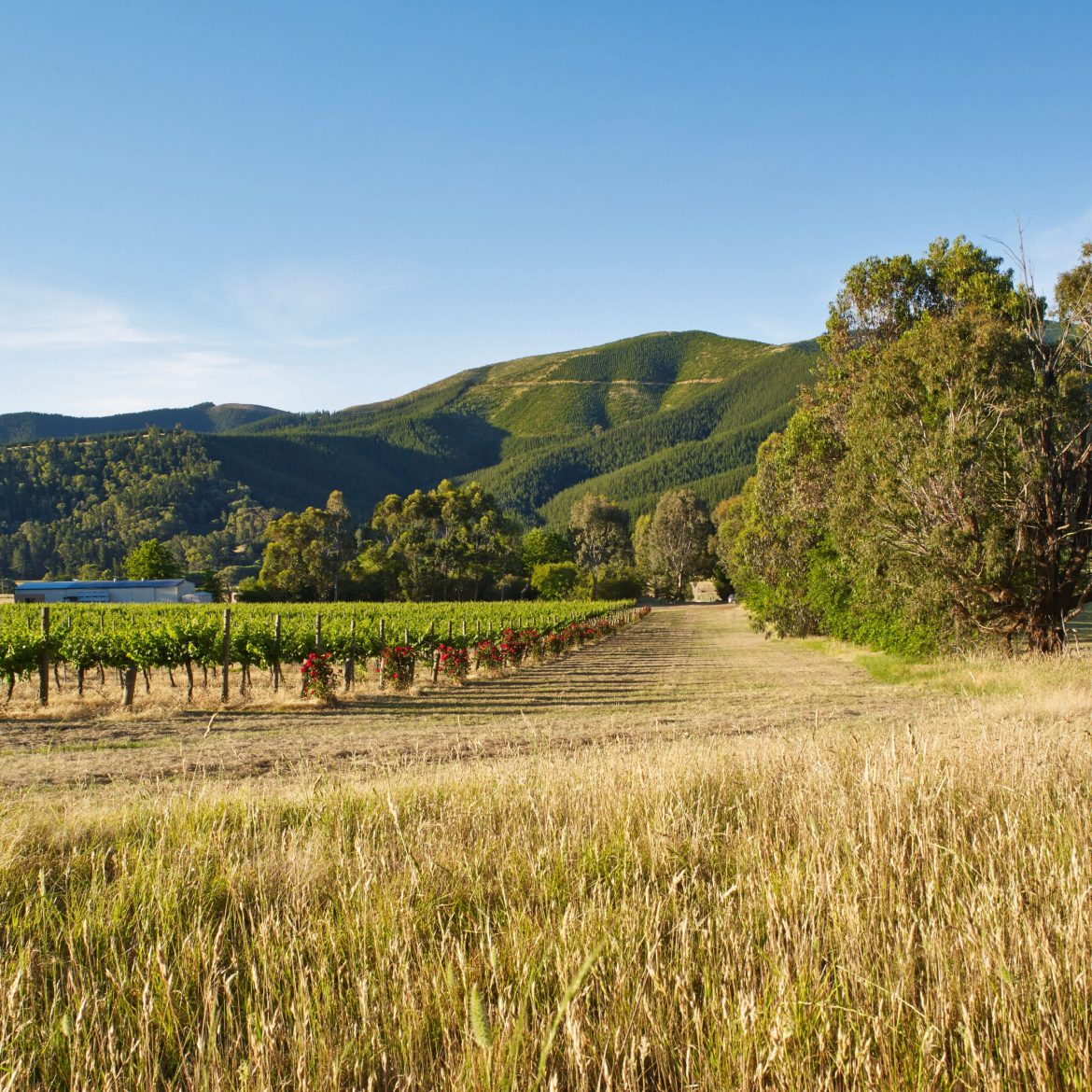The Eagle Range Estate vineyard is located in the Happy Valley near Myrtleford, Victoria