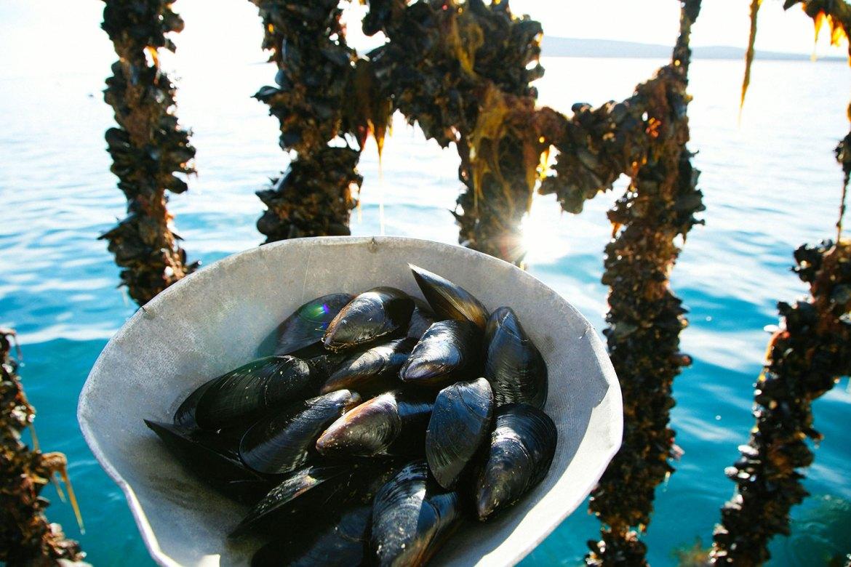 EP Seafoods winter harvest.jpg