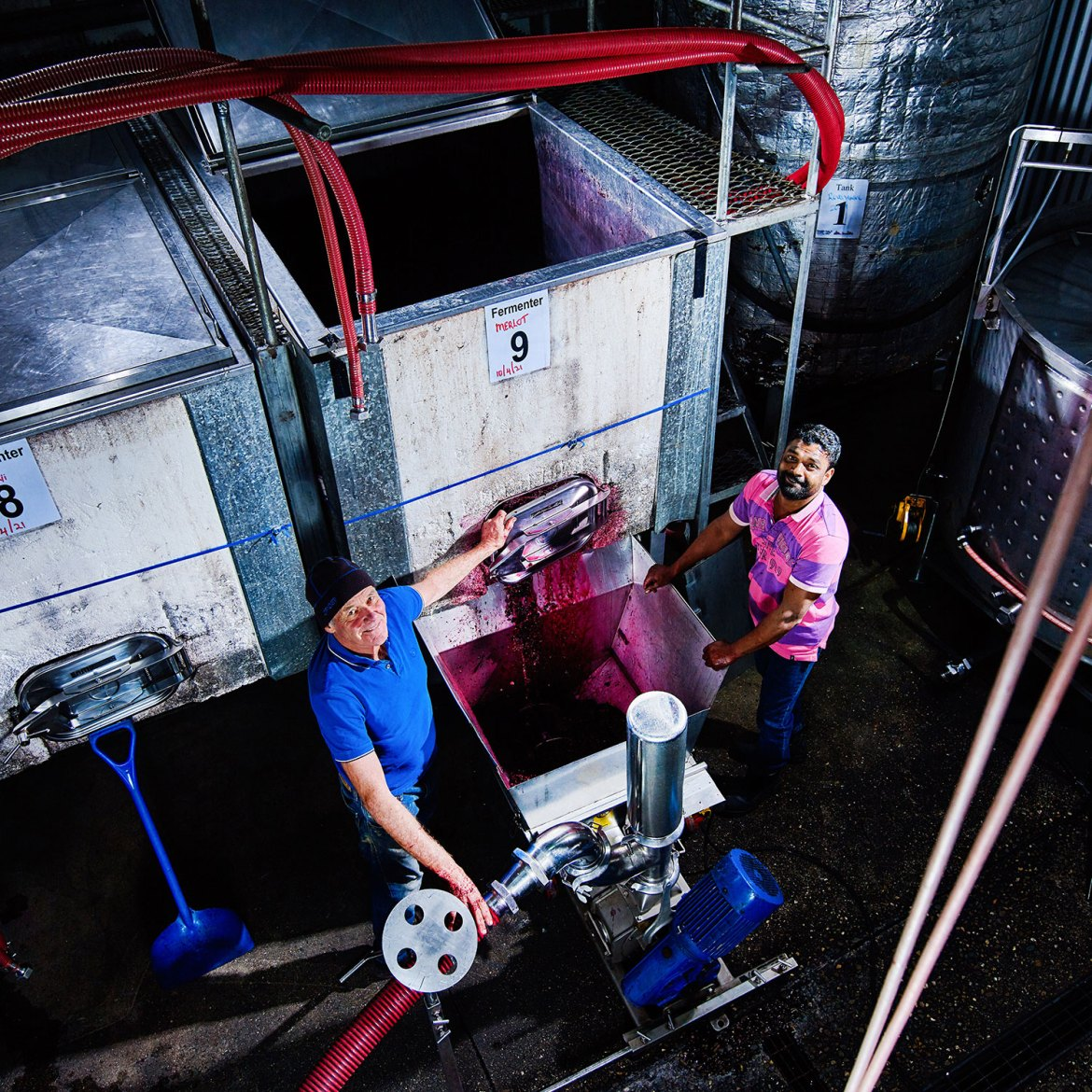 Winemaker John Stolks extracts juice from the winery's open vat fermenters, with assistant Manny