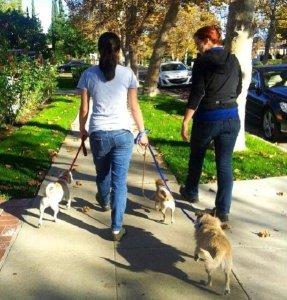 Dog Training School / Service