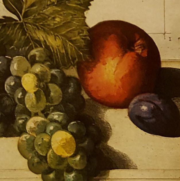 Uva - stampa litografica - cm. 49 x 42,5
