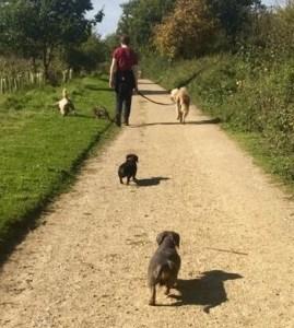 Dogs enjoying an Essex-Wags walk
