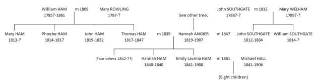 Hannah Southgate tree 2