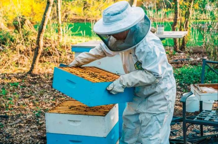 Getting hives: local beekeeper keeps pollinators going