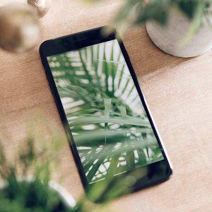 plant_iphone