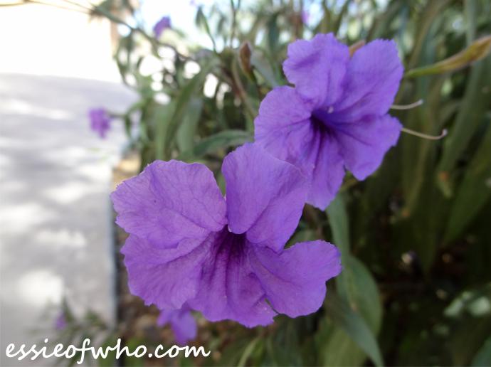 october-2016-flowers-1