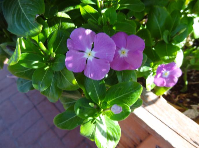 october-2016-flowers-6