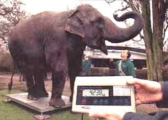 Inventur in Hagenbecks Tierpark: Die Ameise wiegt 0,1 Gramm, der Elefant 4238 Kilo