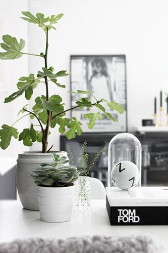 Decorar con plantas_higuera 3
