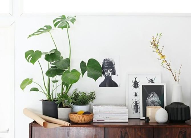 Decorar con plantas_monstera 1