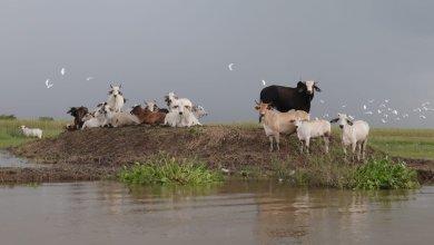Foto de Teme Protección Civil desbordamiento del río Palizada