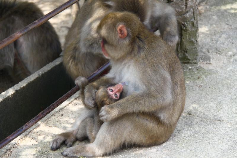 mico2