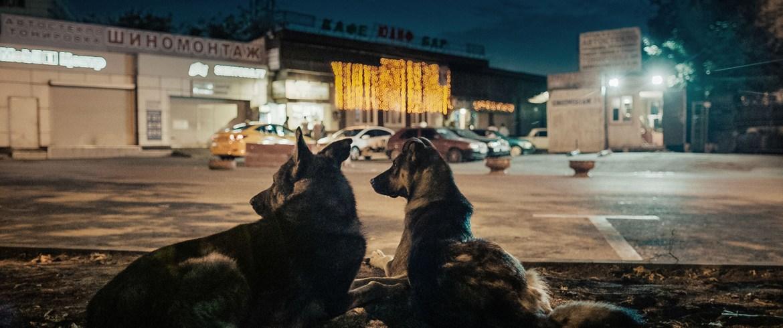 [43ª Mostra de São Paulo] Cães do Espaço (Space Dogs, 2018)