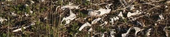 Hallan un centenar de galgos muertos por ahorcamiento en un vertedero de Toledo  (Imagen: EFE)