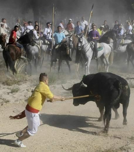 Murió 'Afligido', alanceado en el Toro de la Vega de Tordesillas