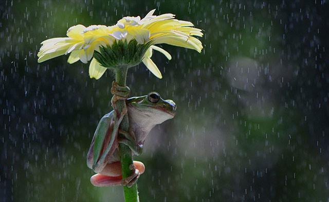 animales-y-sus-paraguas-naturales-14