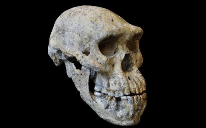 El último Homo erectus se paseó por Java.