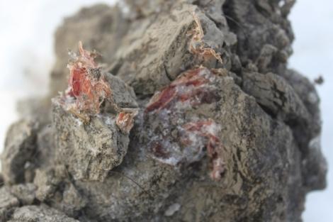 Muestra de tejidos musculares de mamut hallado en Rusia. | AFP
