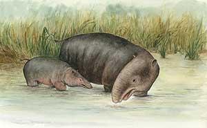 Dibujo de los moeritéridos, una especie de proboscídeos extinguida que está emparentada con los elefantes actuales. (Foto: PNAS)