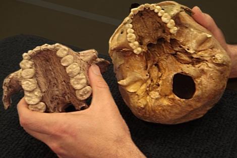 Mandíbulas de 'Paranthropus boisei', encontradas en África. |PNAS