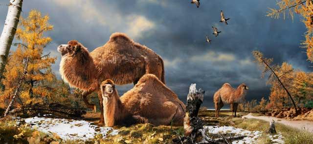 Recreación artística de los camellos del Ártico. | Nature