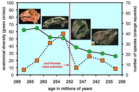 Evolución de varias especies de anomodontos halladas en Rusia, Zambia y Sudáfrica. | Museo de Historia Natural Field.