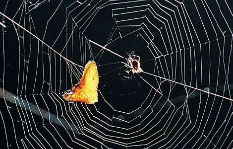Un araña construye su 'tela' en Berlín. | Ralf Hirschberger | Dpa