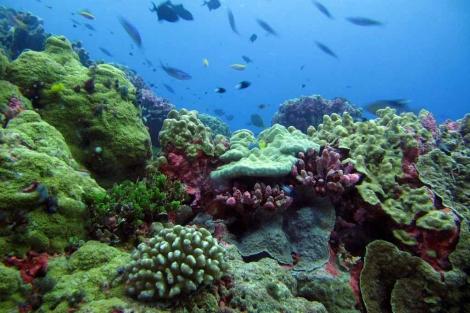 Zona Protegida de las Islas Fénix, en Kiribati.   El Mundo