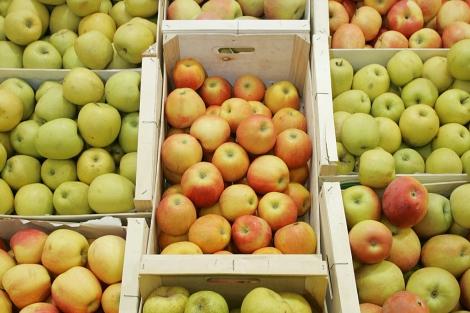 Cajas de manzanas. | El Mundo