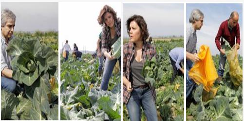 Quem quer casar com o agricultor?